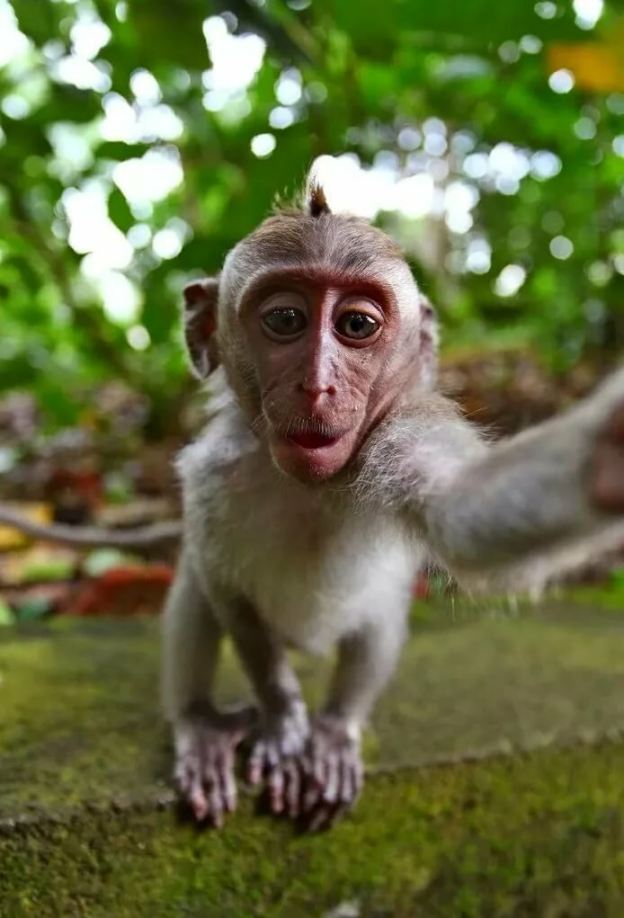 Прикольные картинки обезьянками