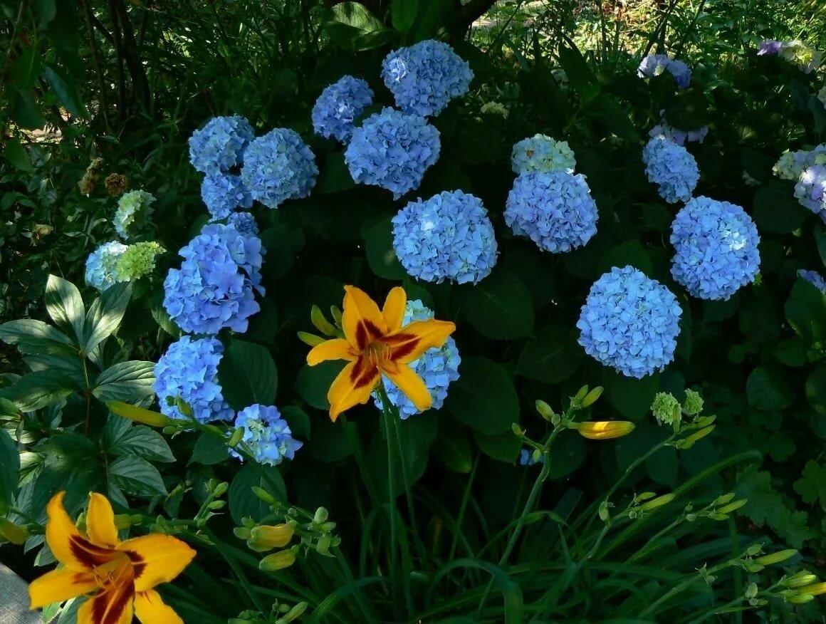 вам название огородных цветов с картинками слову, часть поклонников