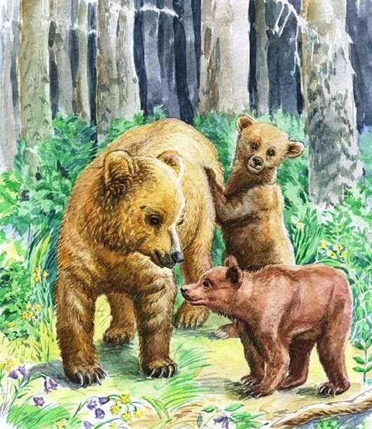 Картинки для детей медведь медведица