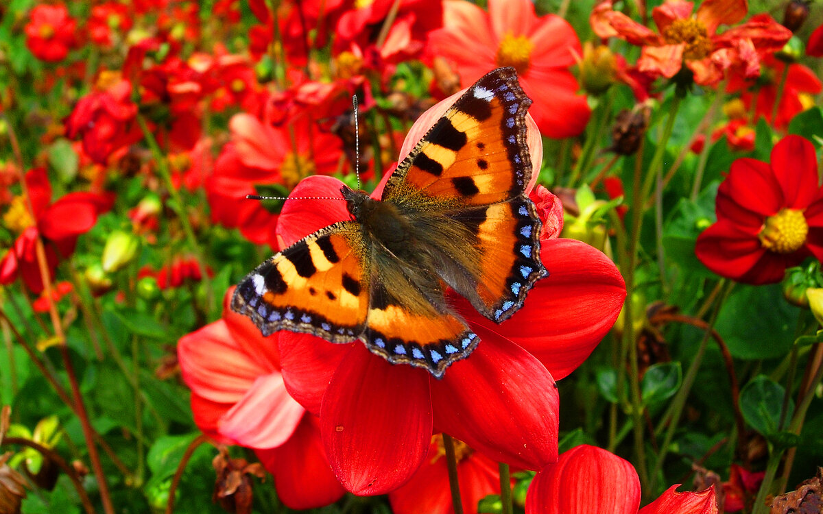 Смотреть все картинки с бабочками и цветами