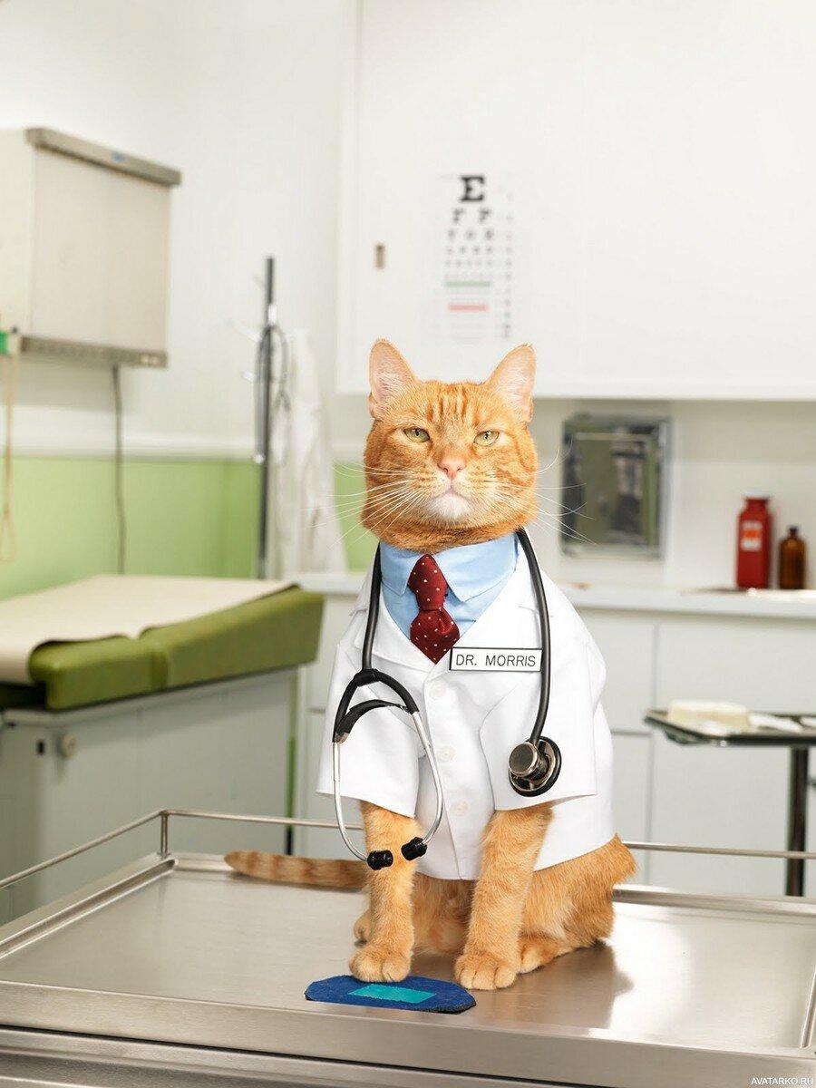 Картинки, прикольные картинки врачей животных