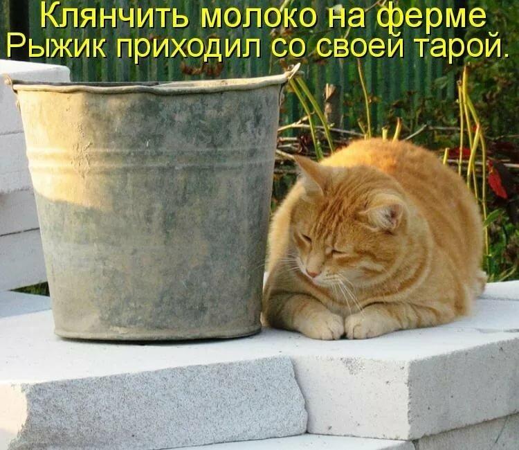 Мой дорогой, позитивные картинки с надписями коты