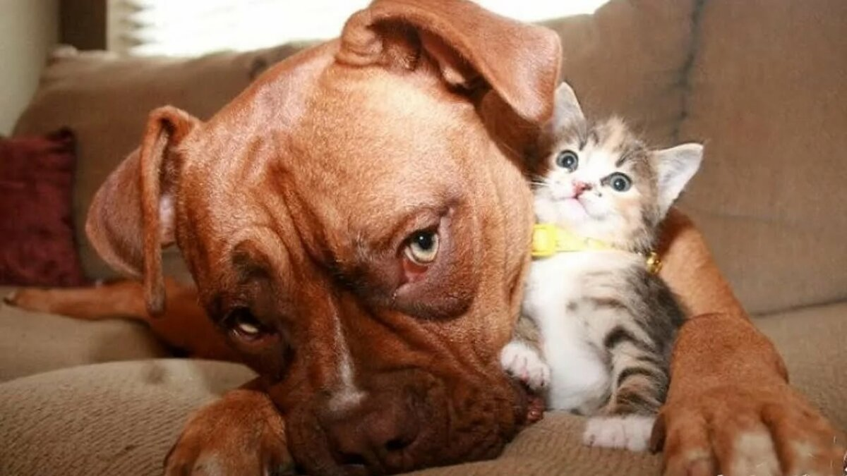 Фотки смешных котиков и собачек