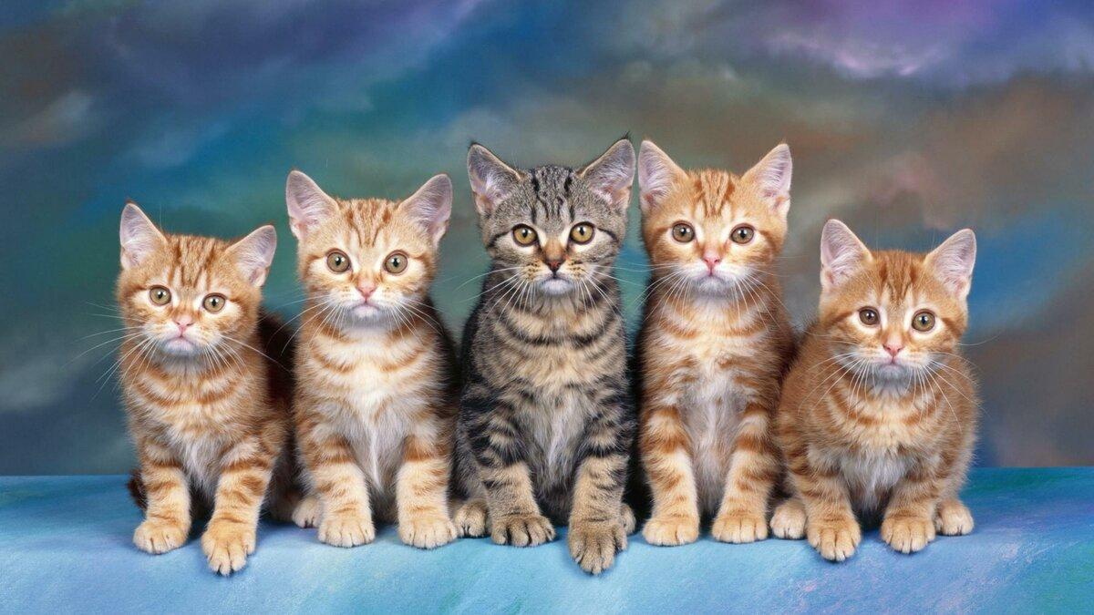 Открытки, картинки много кошек для детей