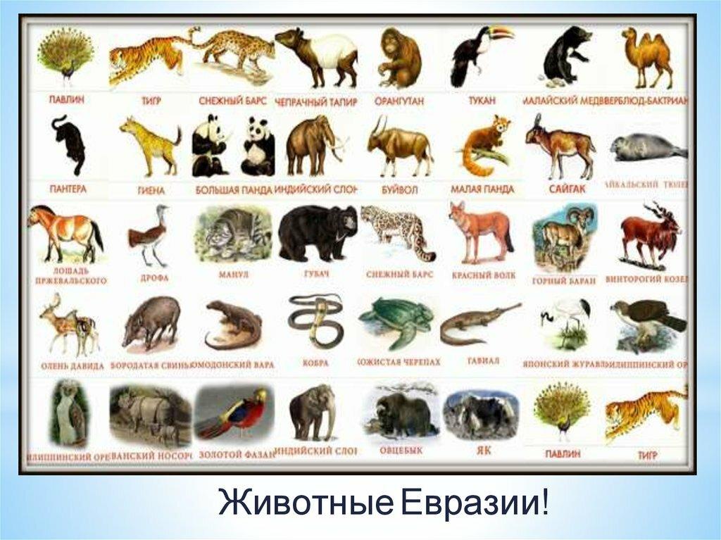 все животные мира список фото вот если можно