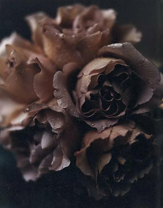 Фото в коричневом тоне