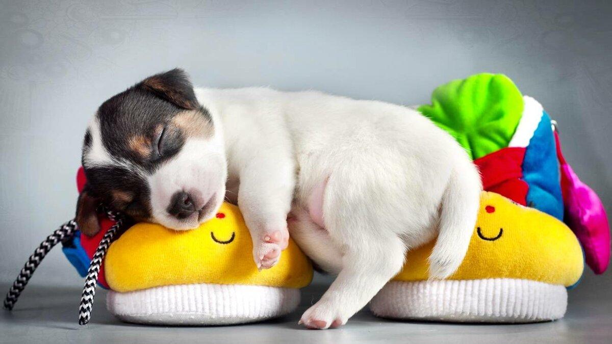 Смешные картинки с собачками щенятами