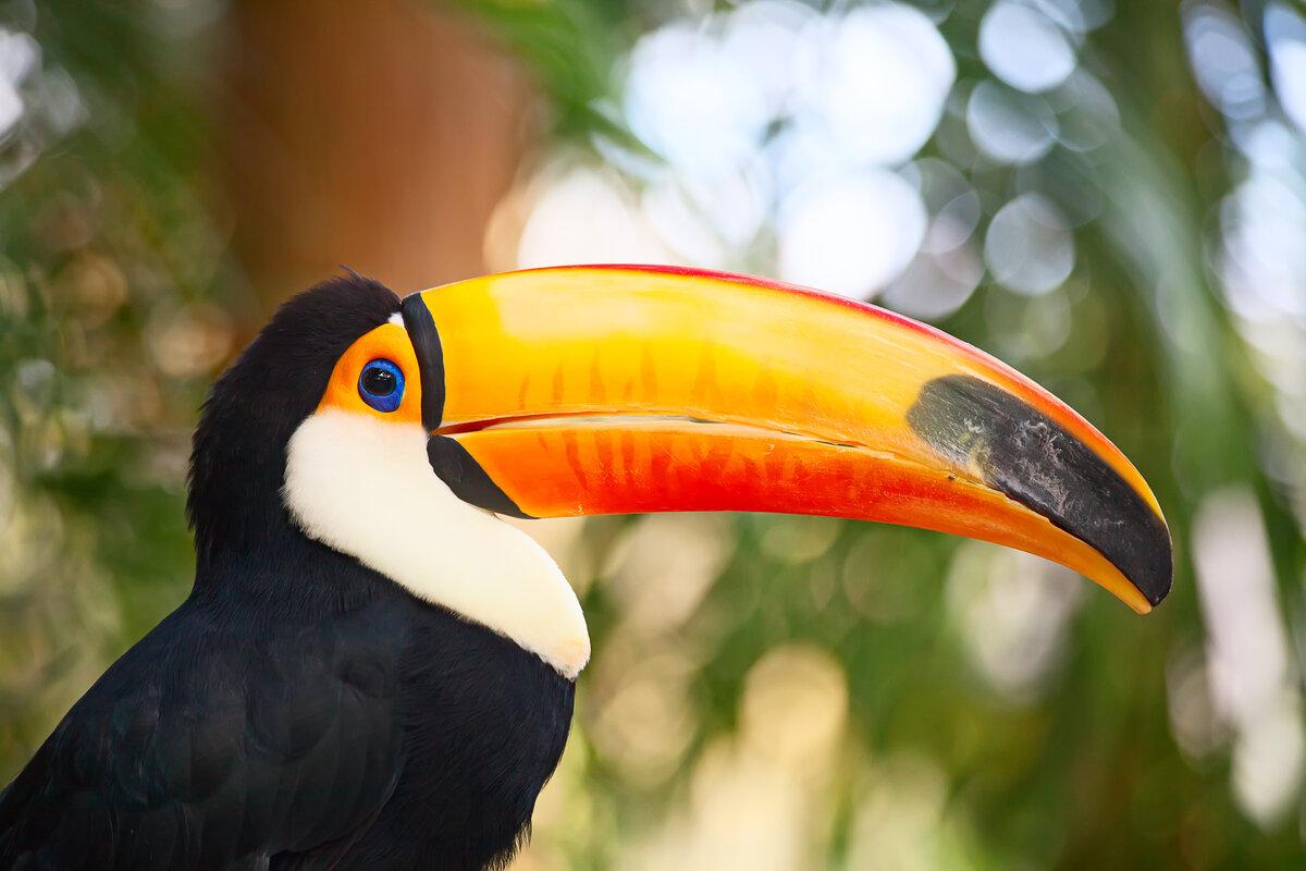 Птицы с большим клювом названия