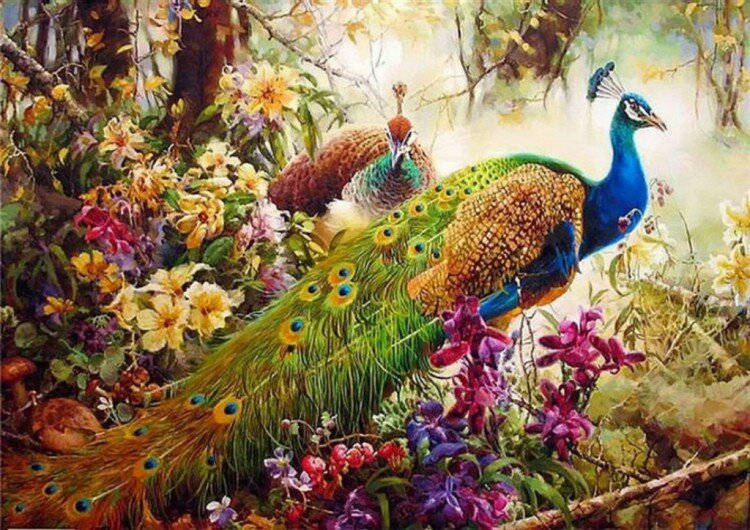 Картинки с райскими птицами, доброго утра