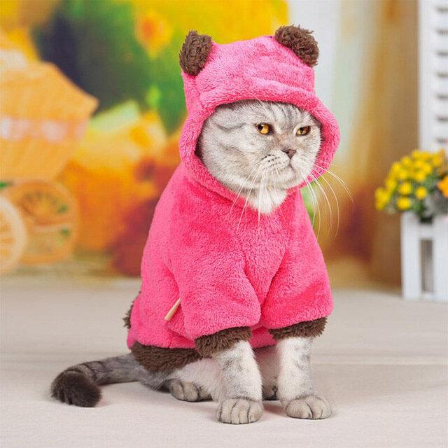 Картинки кошка в одежде