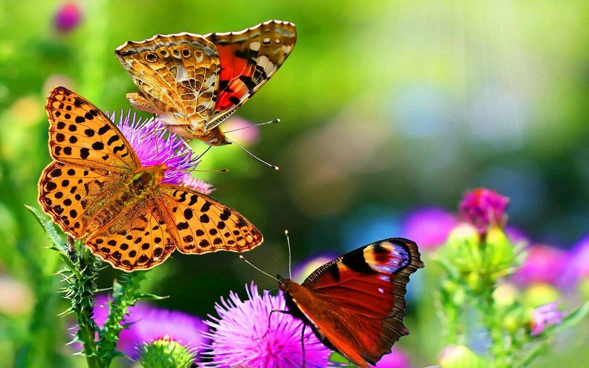 если она картинки на телефон красивые цветы и природа лофт