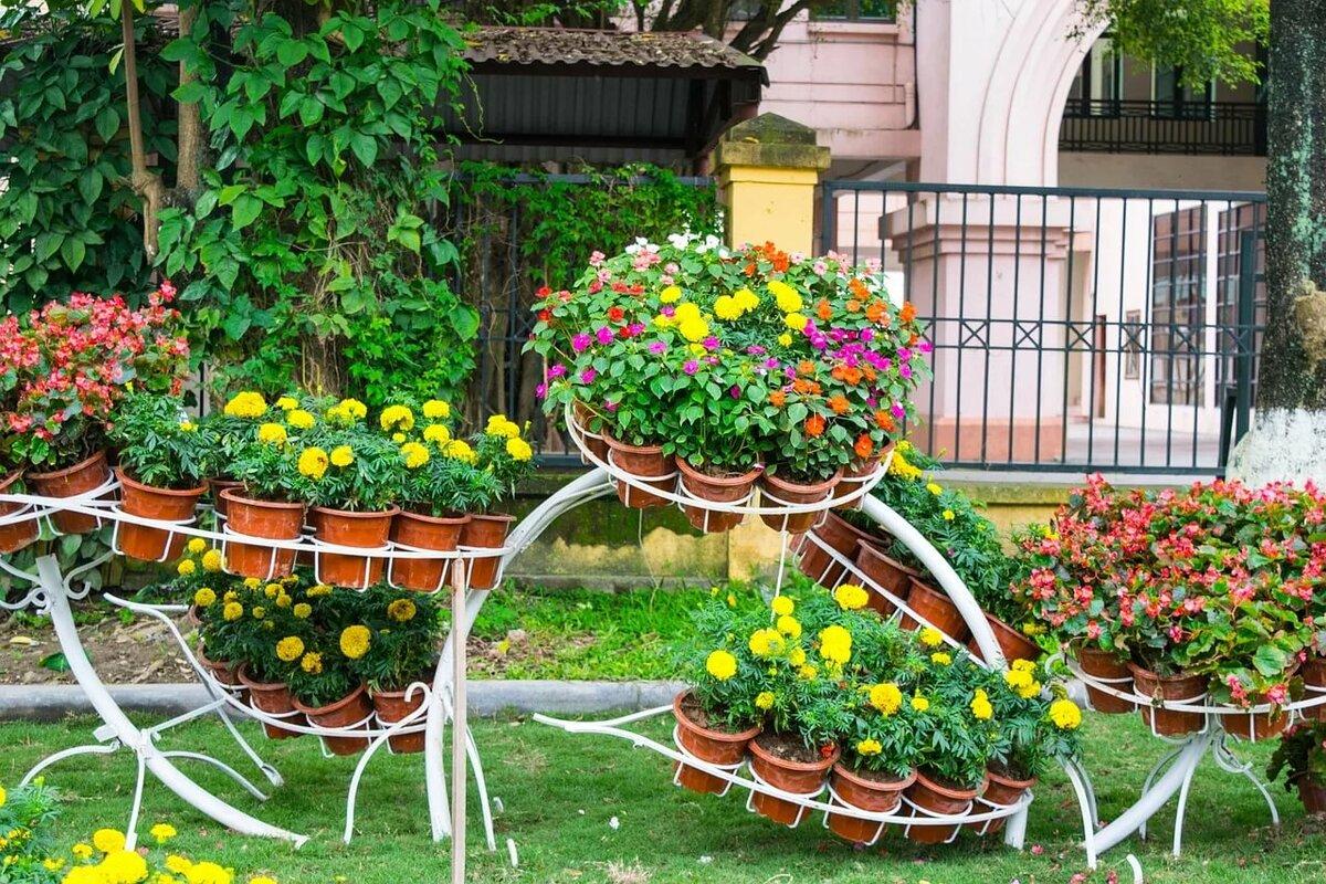 цветы для двора фото рецепты