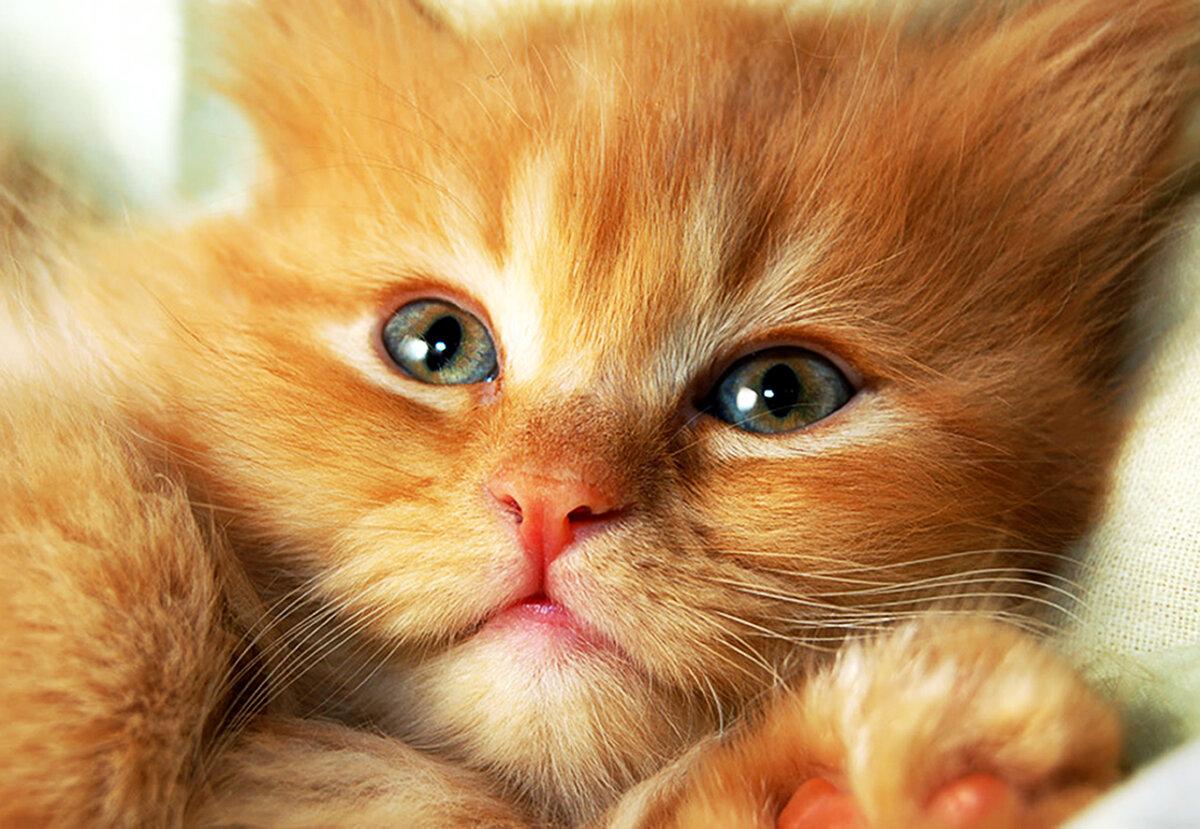 Прикольные, картинки котенка с надписями