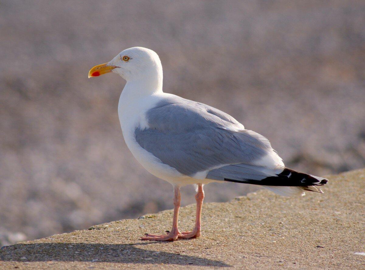 птичка мартын картинки увидели ужа