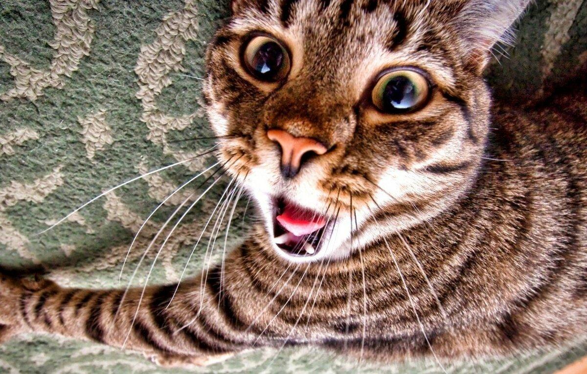 картинка смешные морды кошек первой коллекции будут