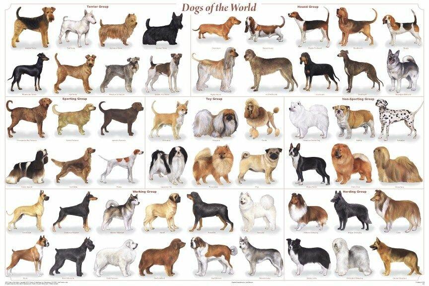 картинки средних собак название модели