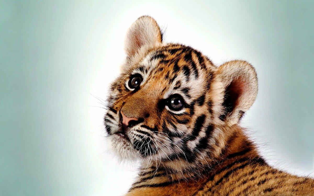 Лучшие картинки с животными