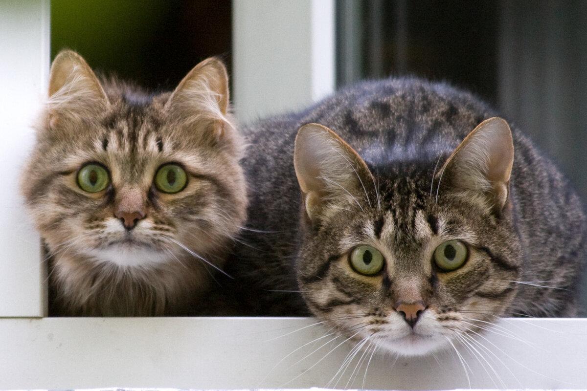 Кошки картинки и приколы, февраля день женского