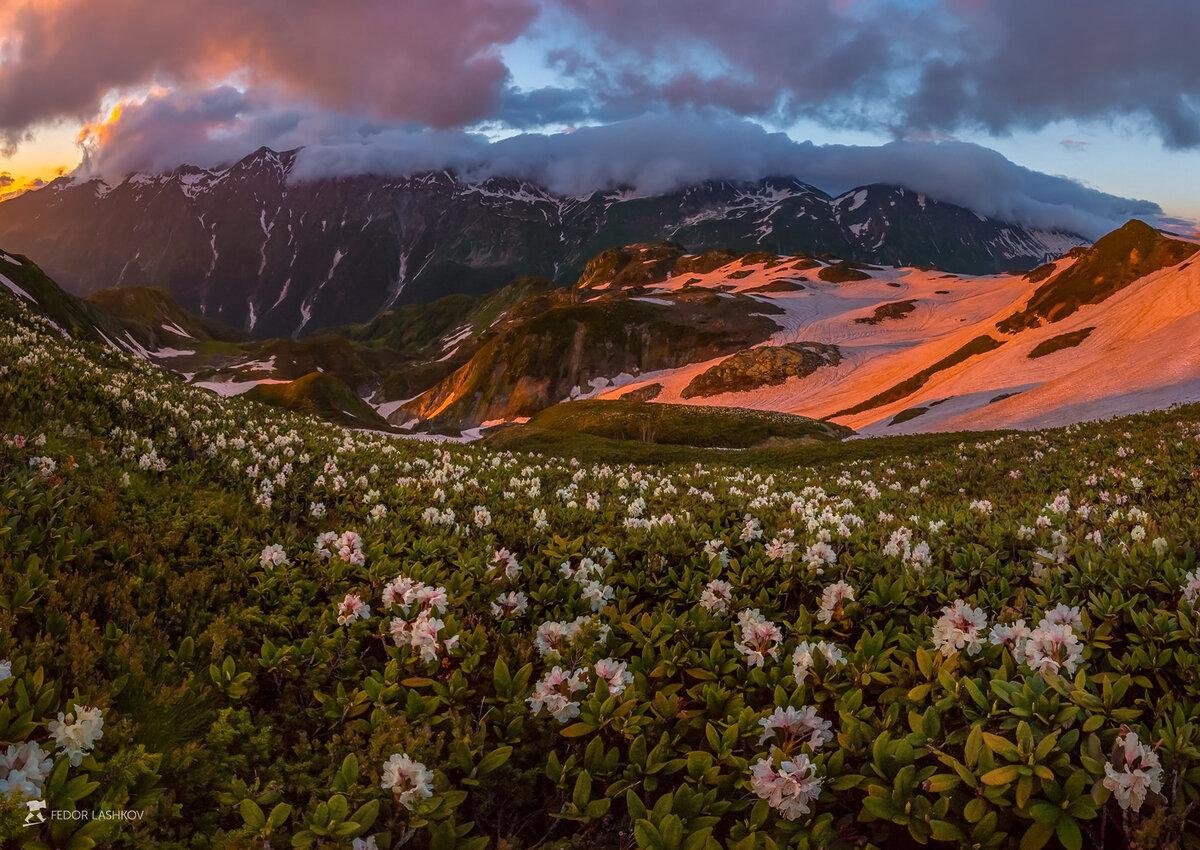 картины альпийские луга в абхазии фото девушка вместе