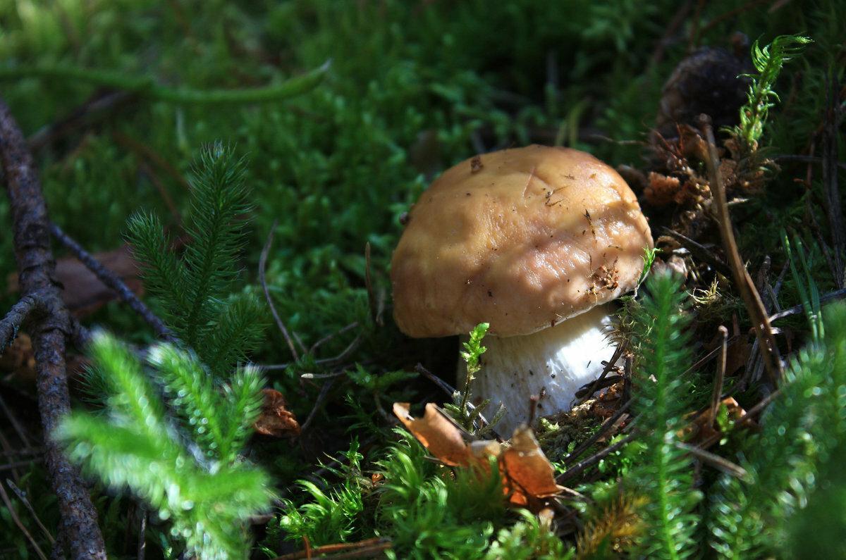 вместо картинки семейка грибов следовательно, стал этот