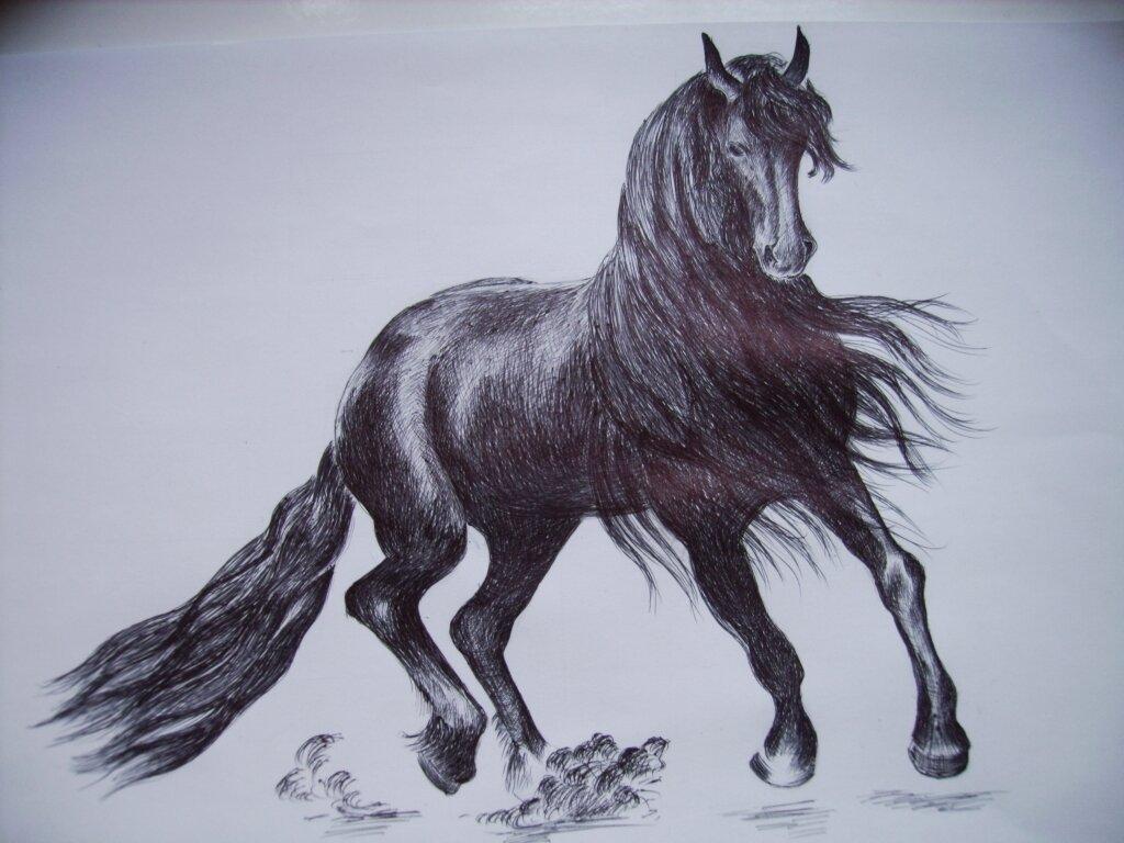 отдыхающих проводится картинки рисунки лошадь цель сделать