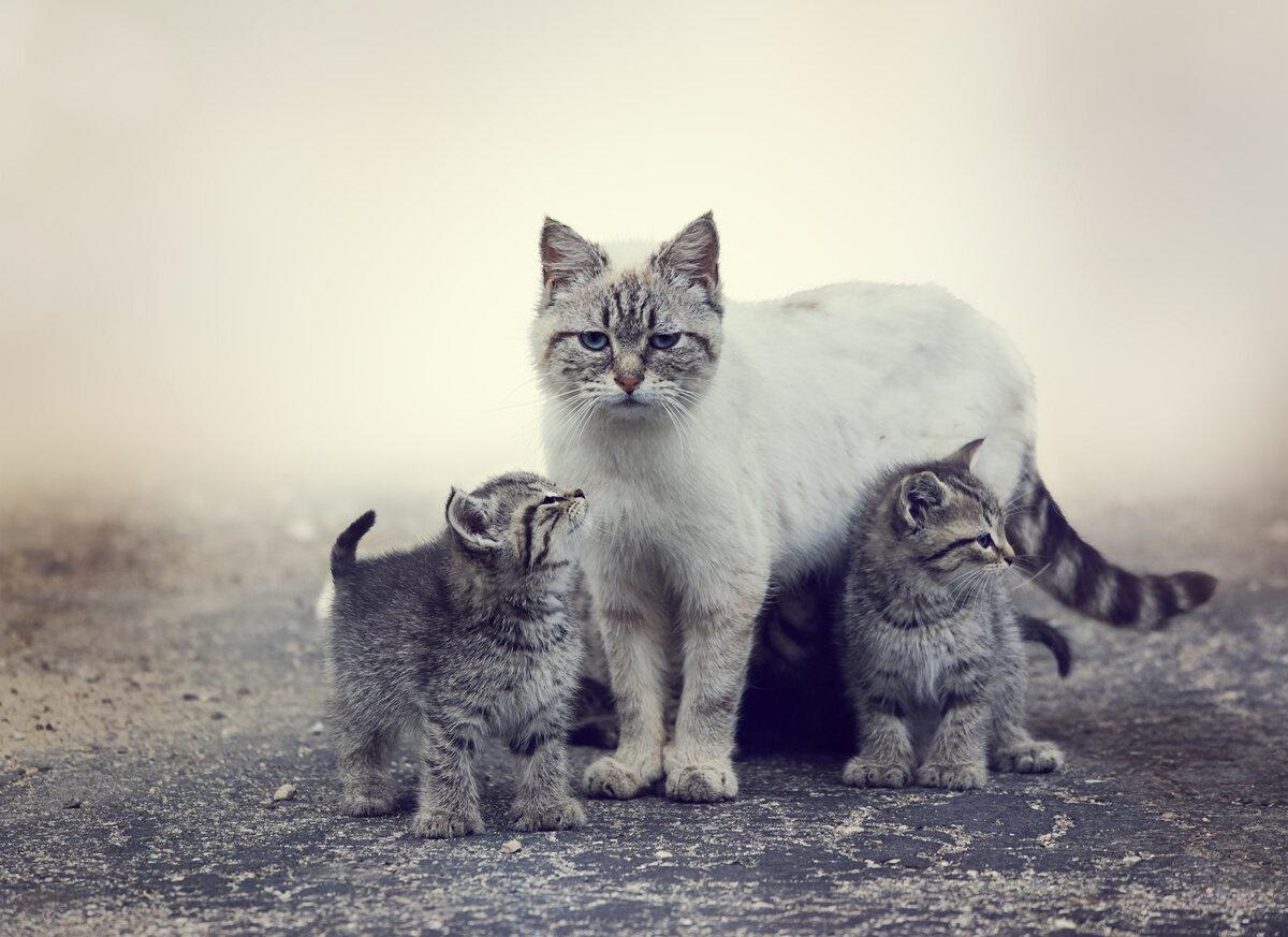 Кошка с котятами двумя фото