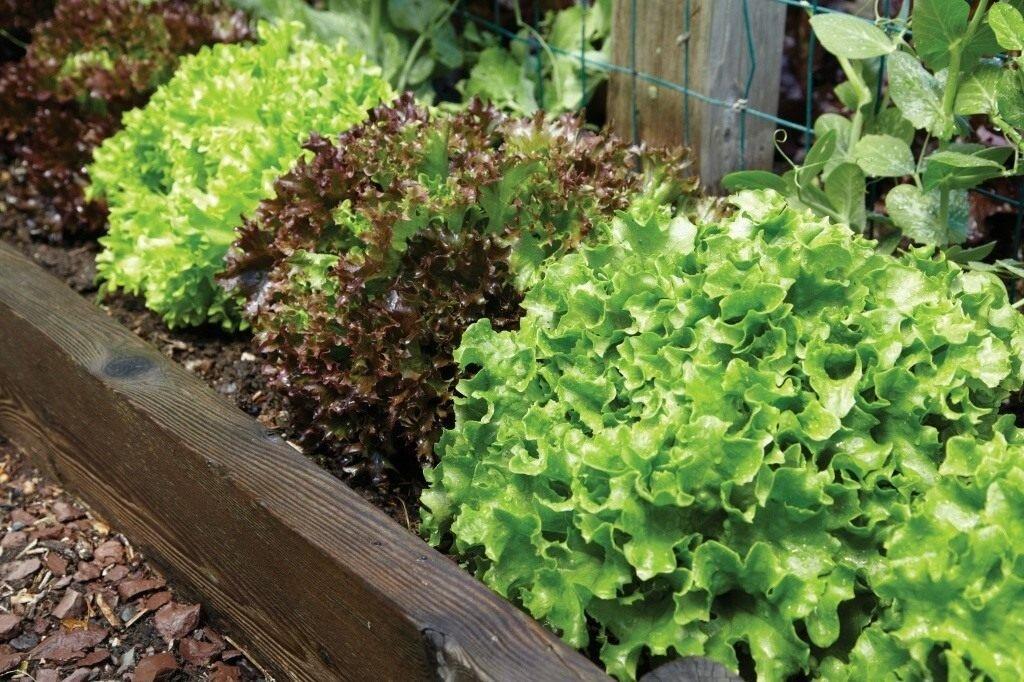 Салат на зиму с фасолью фото что