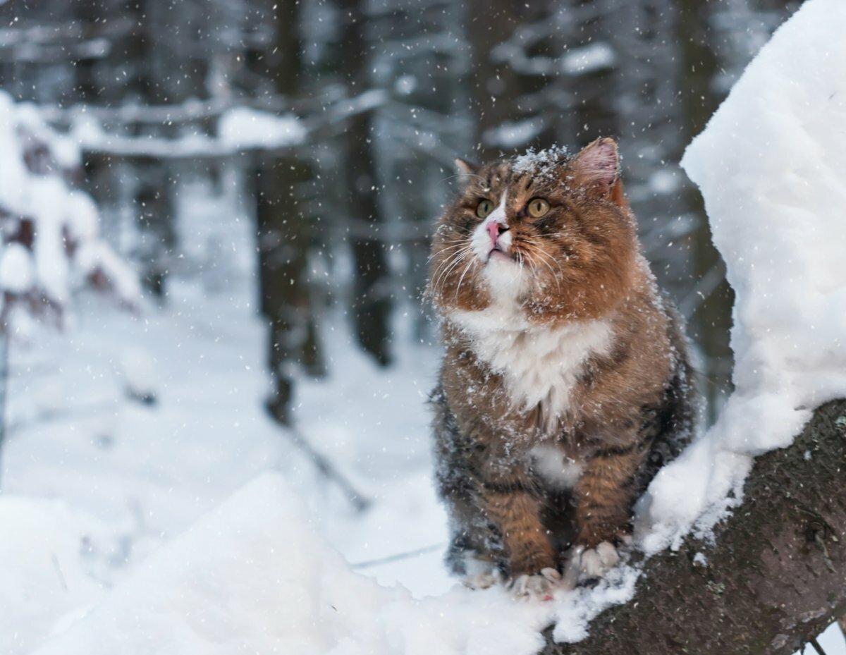Картинки, зимние смешные картинки с животными