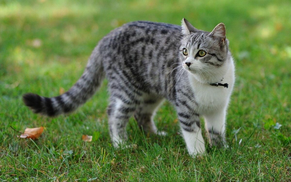 Картинки кошек картинки, надписью аск