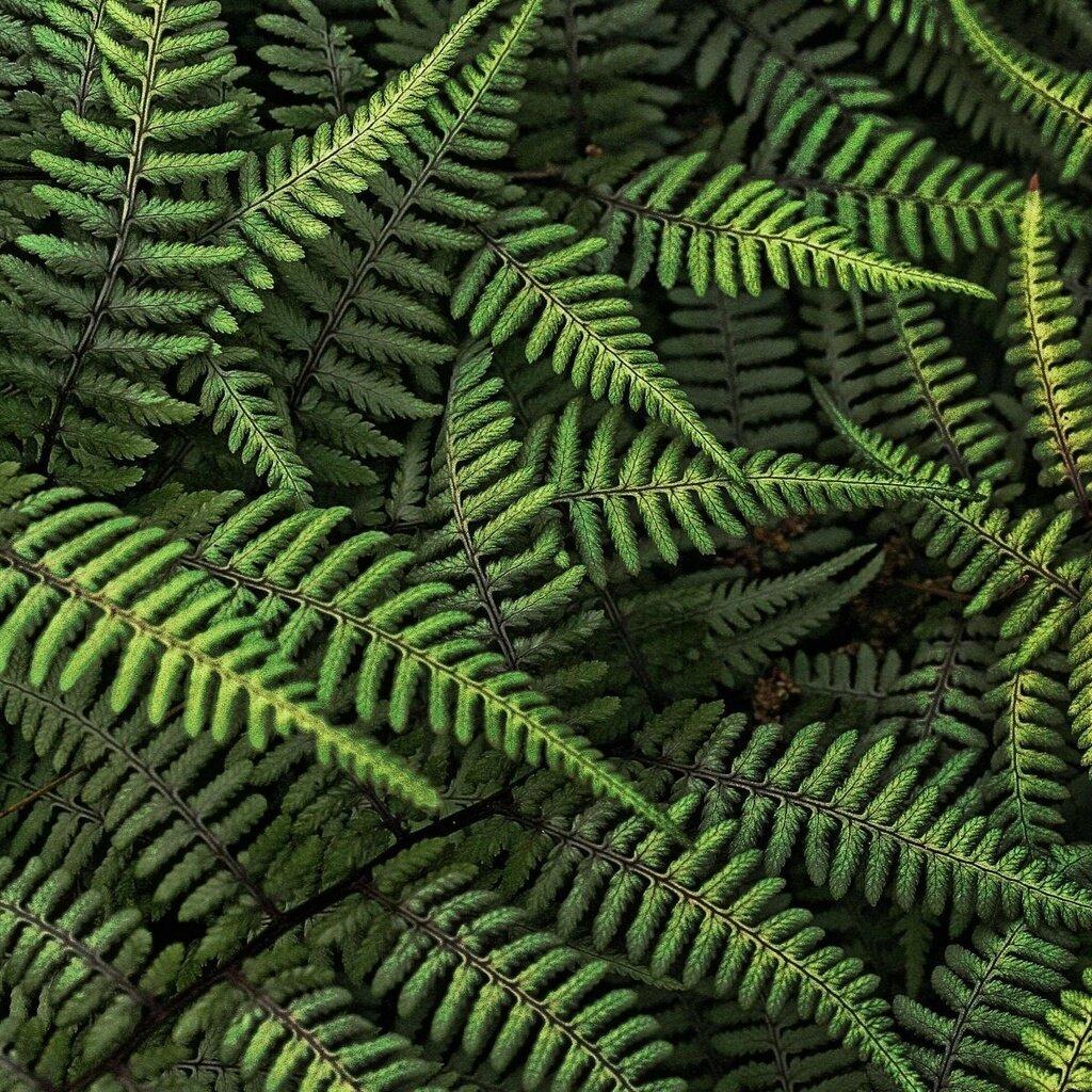 Листья папоротника красивые картинки