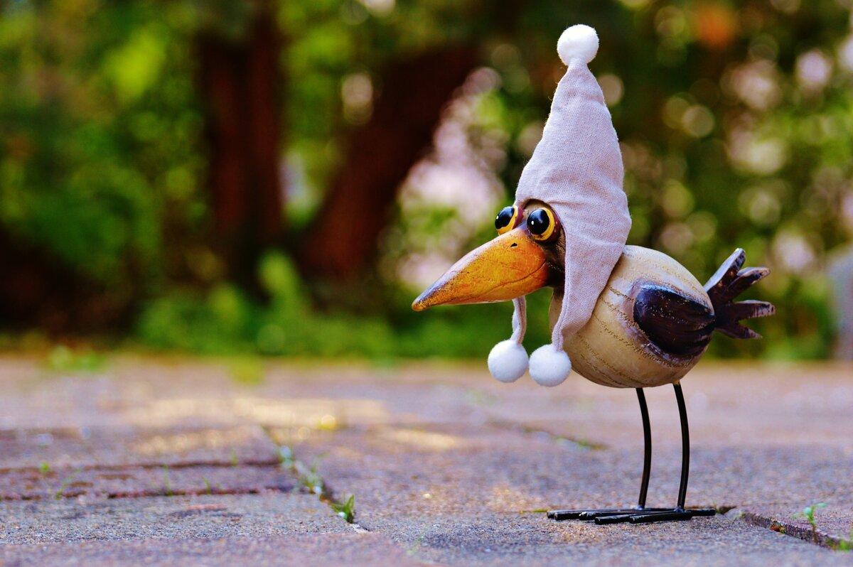 Картинка птичка приколы