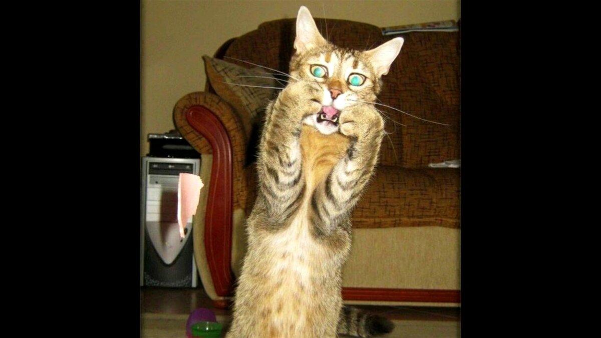 Картинки смешные кошки до слез видео, поздравить