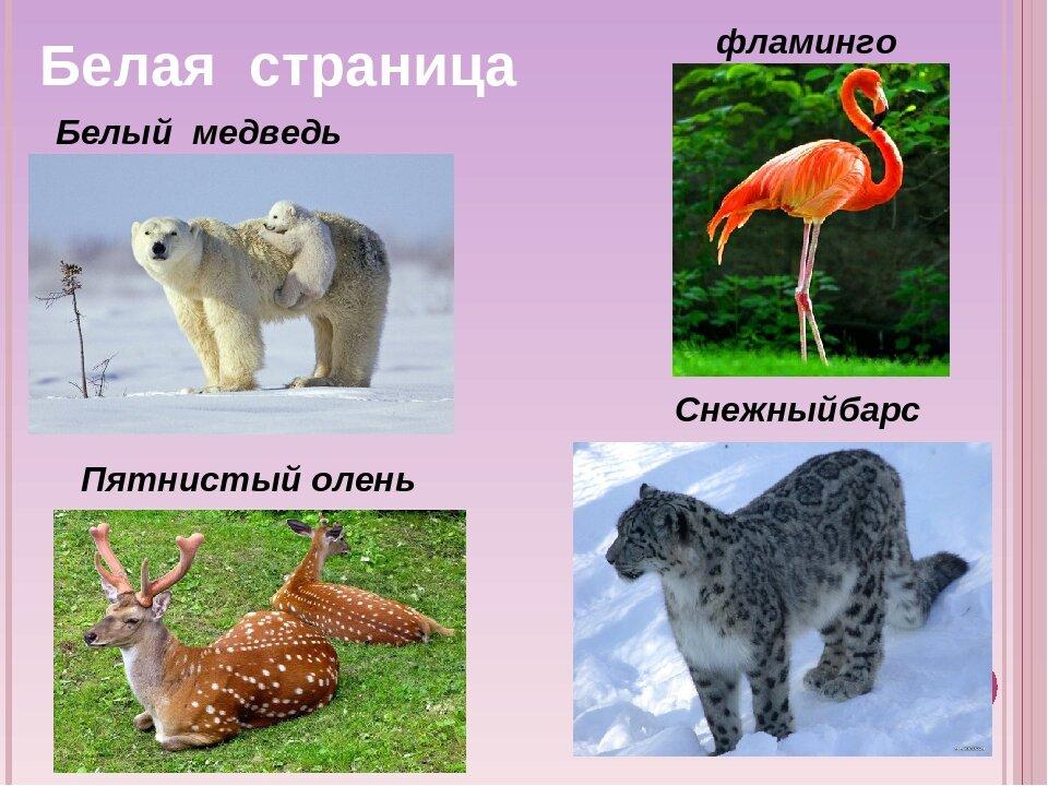 картинки из красной книги животные и растения россии как