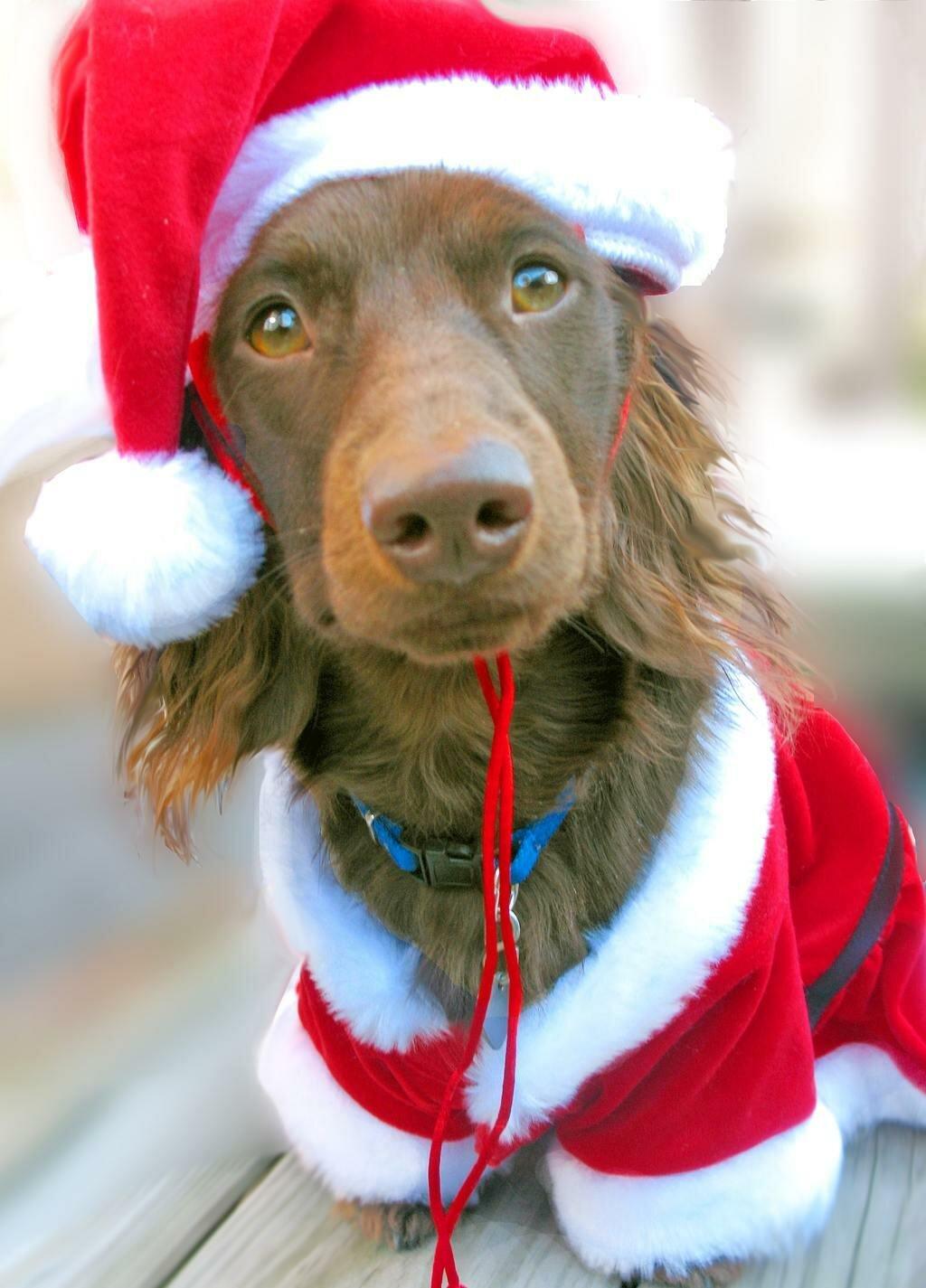 которых рождественские фото приколы даже такому