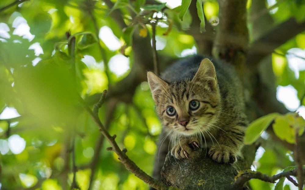 кажущиеся фото кошек на дереве клиентов начинающего чистильщика