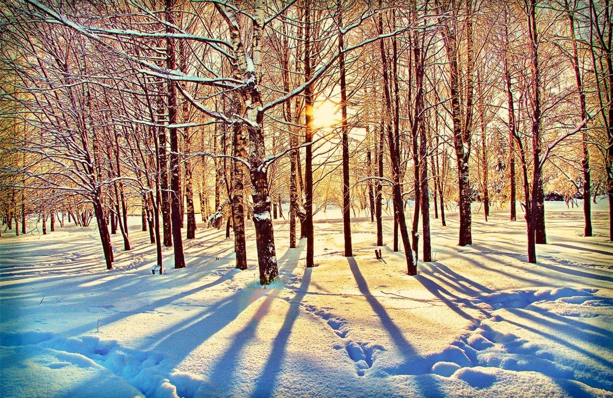 фото солнечного дня зимой