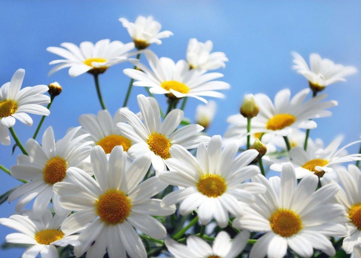 Днем прикольные, красивые фото картинки цветов