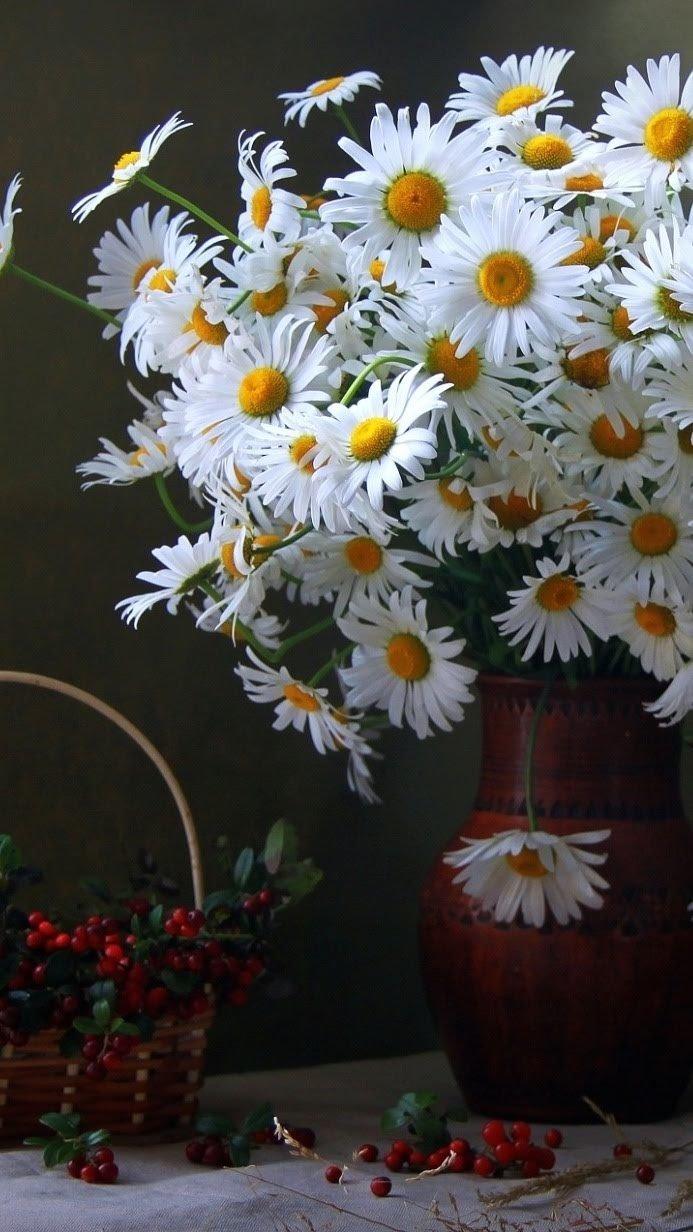 букеты полевых ромашек фото красивые авито есть куча