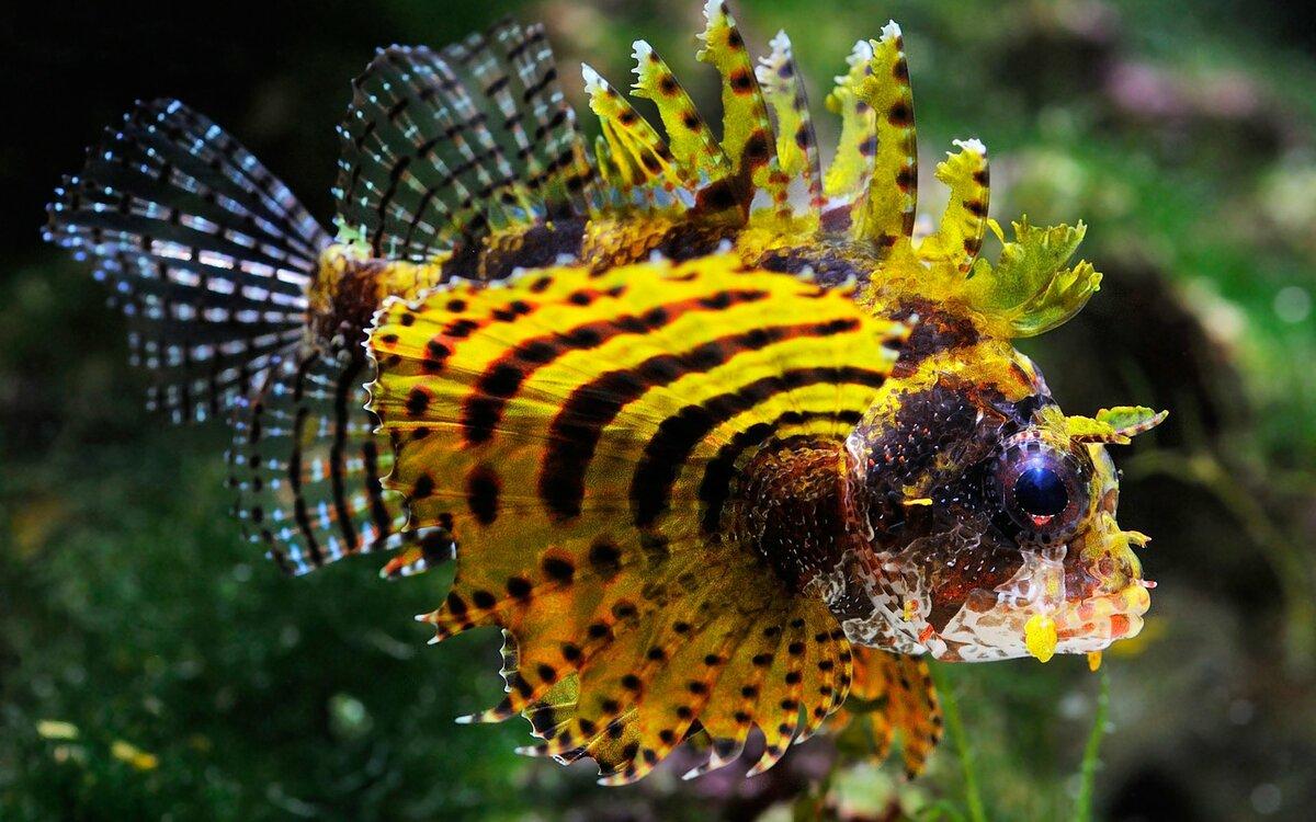 уже кунашире яркие рыбы фото знакомство алсу перевернуло