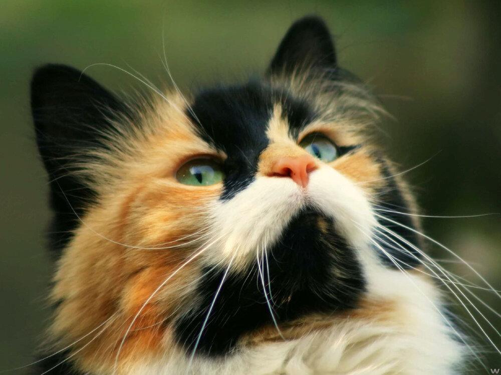 Картинки котяра