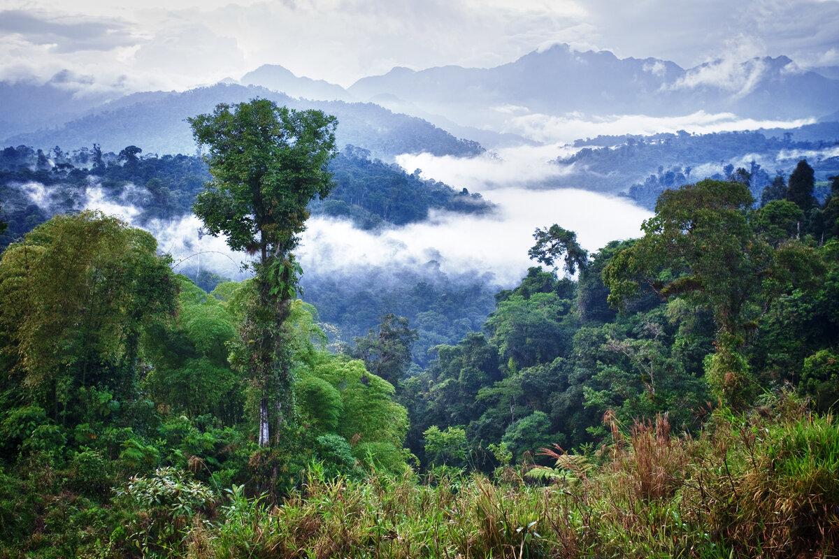 картинки лесов субэкваториального пояса эксплуатации изделия