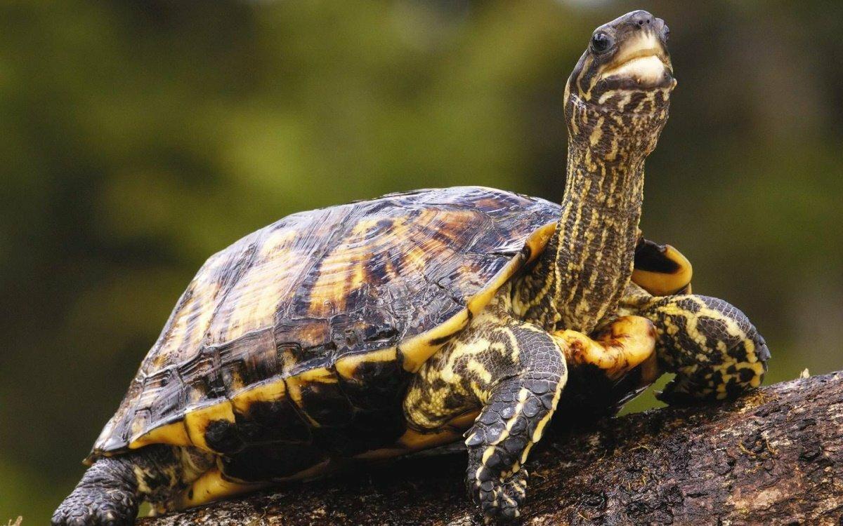 Картона, черепахи картинки фото