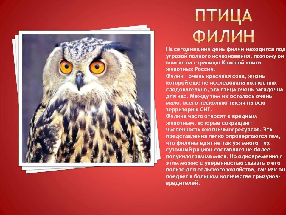 Картинки животных из красной книги россии птицы