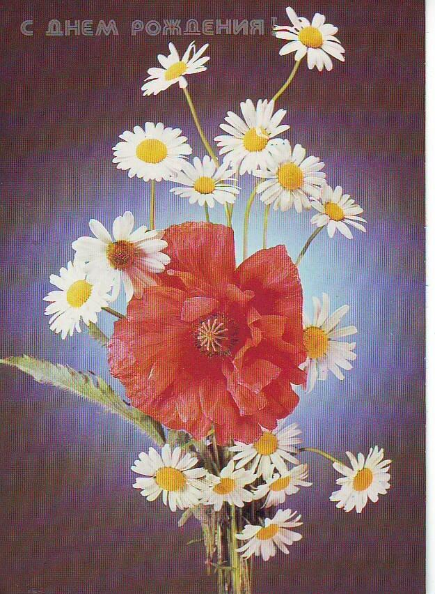 Обезьянами, открытка с днем 77 рождения