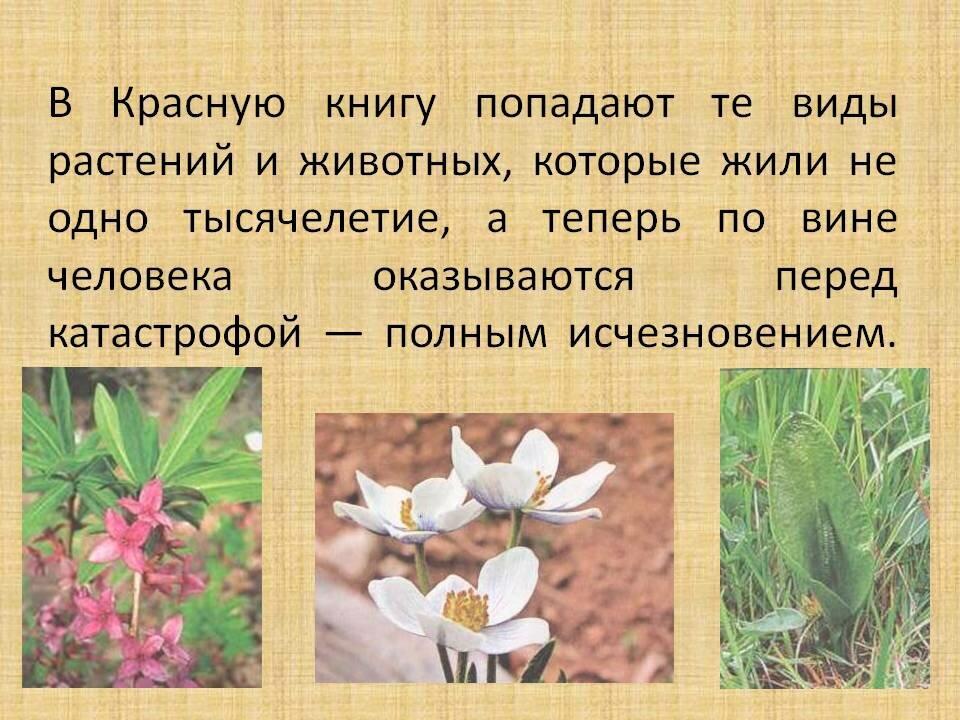 картинки из красной книге животные или растение