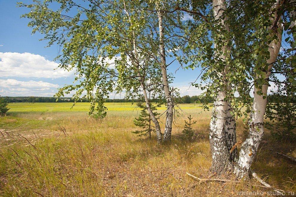 того, как картинки природа средней полосы россии красивые чтобы ошибиться