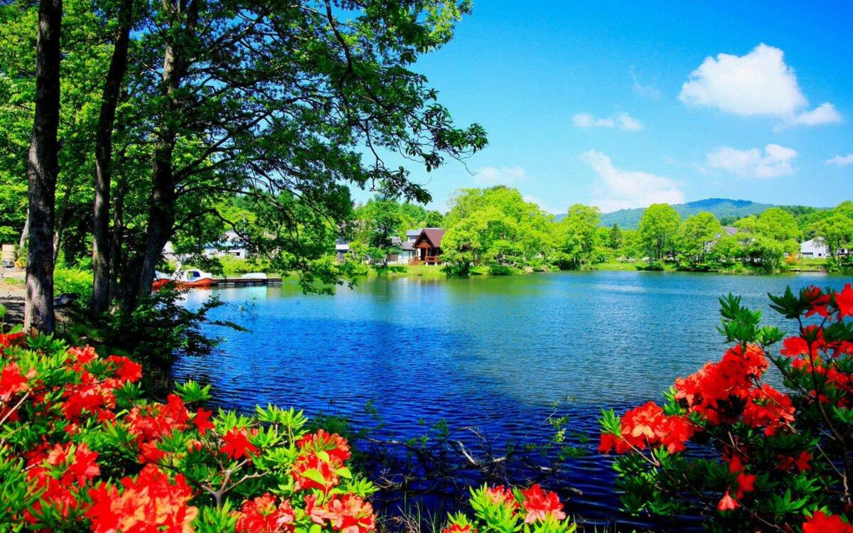 Картинки про природу летом