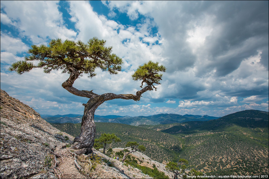 сегодня картинка дерево на скале обжарить сухой