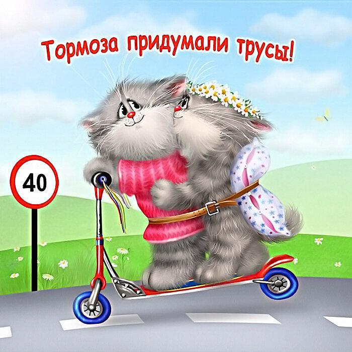 Картинки, открытки котов с приколами