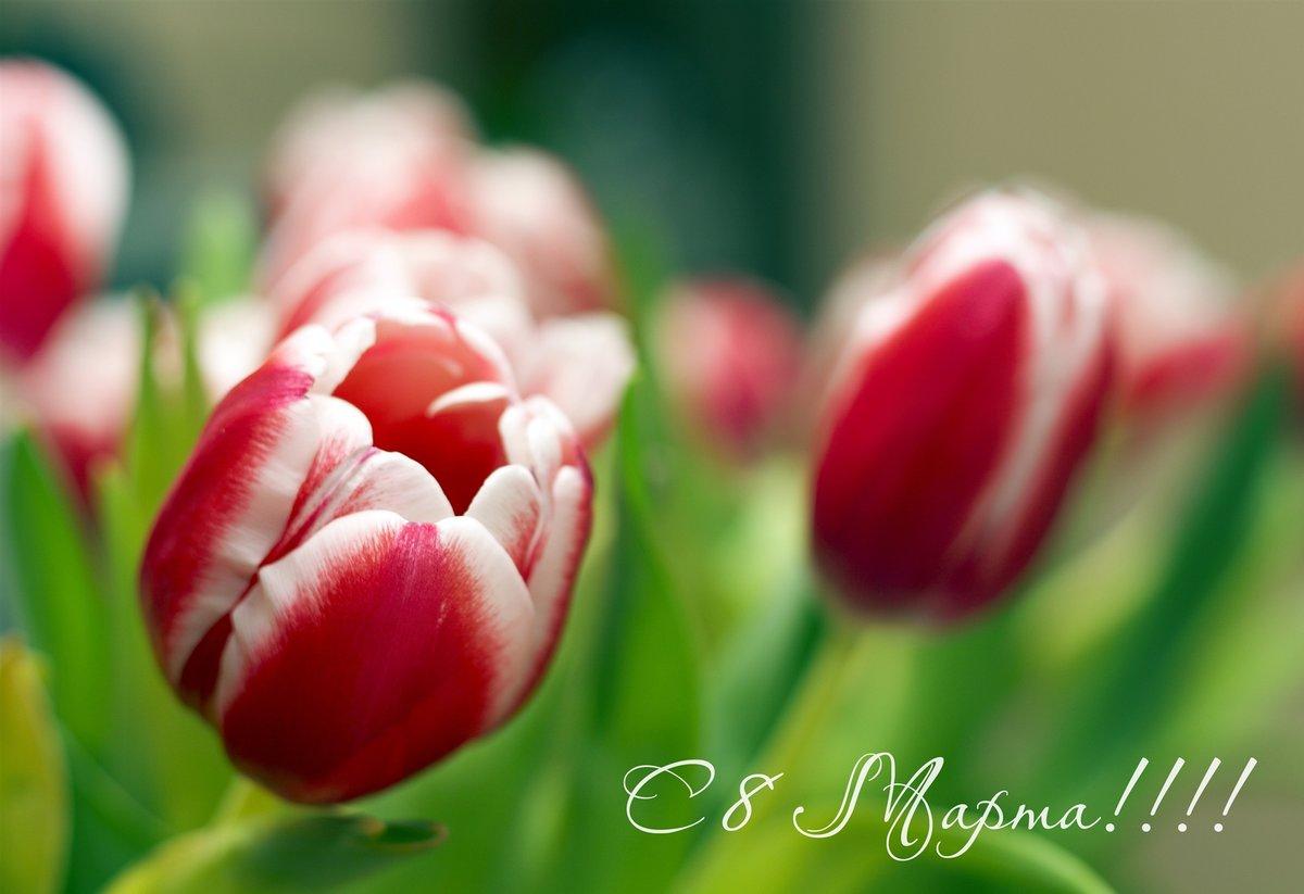 Марта маме, открытки поздравления к 8 марта фото